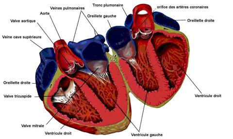 cardiologie cabinet m dical cardice medical office. Black Bedroom Furniture Sets. Home Design Ideas
